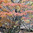 芭蕉池の紅葉