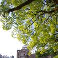 原爆ドームの木々