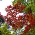 緑の紅葉と紅い紅葉