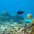 海底パノラマ
