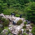 ニホンオオカミ発見