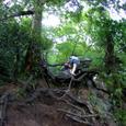木の根道クライミング