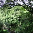 三徳川の渓谷