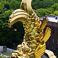 天守閣からの金の鯱
