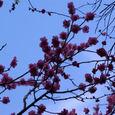 南都も梅の季節