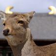 鴟尾で凛々しい鹿の顔