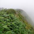 笹の藪漕ぎ下山の風景