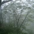 山水画の森
